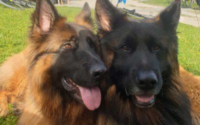 Hanna und Hugo