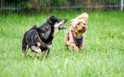 Josy und Sammy