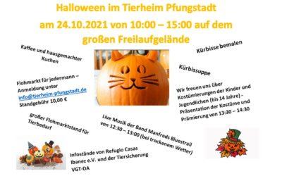 Halloween im Tierheim